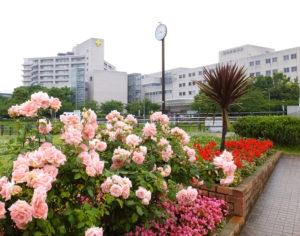 今回の講演会を主催する横浜労災病院。1991年6月にこの地に開設された(同院については同院サイト「病院概要」のページ参照)※講演会場は横浜ラポール