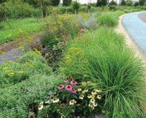 新横浜公園「メドウガーデン(草原のような庭)」は、人気ガーデンデザイナーのポール・スミザーさんがデザイン。昨年(2017年)3月にワークショップ参加者やボランティアとともに作り上げた(写真は港北オープンガーデンのパンフレットより・2017年5月開催の講演会の記事)