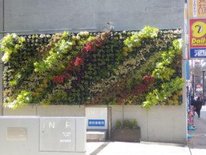 新横浜エリアで初参加の「グリーンファザード」は、新横浜2丁目のマリノス通り・スクエアビルの壁面を利用した緑化の試み。横浜市「横浜みどりアップ計画」の助成金により街ぐるみでの「花と緑のおもてなし」を目指す(新横浜町内会・奈良造園土木株式会社提供)