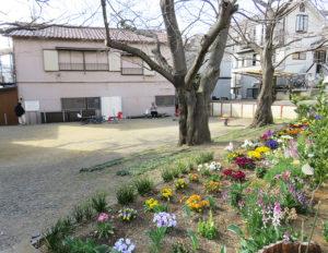 大倉山でも「横浜みどりアップ計画」や東急電鉄などからの助成で、各町内会や商店街などでの花壇づくりが進行。大倉山1丁目「市之坪こどもの遊び場」はさくらまつりのスタンプラリー箇所としても街の重要スポットに(3月19日)