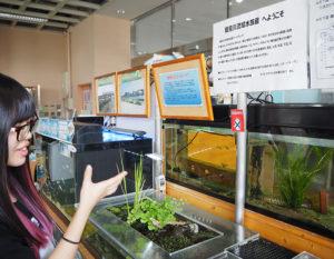 鶴見川の調査も手伝う石川友莉さん。新羽ワンド(鶴見川岸の魚が多く生息する場所)で出会った純淡水魚・カムルチー(右)が今一番のお気に入りだという