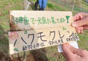 新羽小学校の卒業生手作りの「ハクモクレン」の樹木銘板。毎年の卒業記念としての歴史を重ね、15回目の植樹祭の開催となった