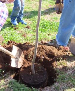 卒業生一人ひとりの手により「春一番に花が咲く」というハクモクレンの木の植樹が行われた