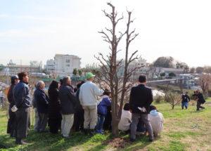 新羽小学校、そして並び立つ新羽中学校、鶴見つばさ橋をも眺める高台にある「新羽丘陵公園」。植樹されたハクモクレンの木とともに記念撮影を行った