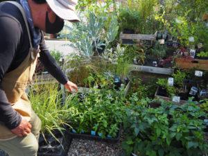 同店でも約95%の比率で扱っているという「宿根草」を育てる魅力を伝えたいと意気込む