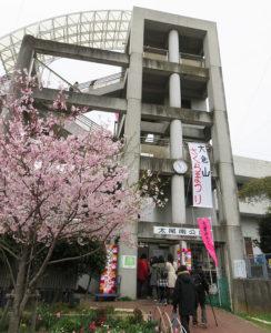 開催の中止が決まった「大倉山さくらまつり」(2019年3月の開催時)