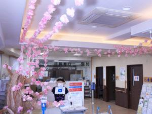 幻想的な「桜サク」空間が演出されていた(新羽地域ケアプラザ・コミュニティハウス、3月6日)