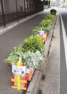 「新羽のみらいを作る会」では、地下鉄ブルーラインの高架下、新羽地域ケアプラザ・コミュニティハウス横の歩道の花壇に花を植えてメンテナンスをおこなっている