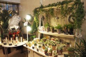 観賞用植物も多彩に並ぶ。冠婚葬祭に長けた「自社内製化」で、日持ちもいいという。胡蝶蘭などでビジネス需要も期待できそう(5月13日)