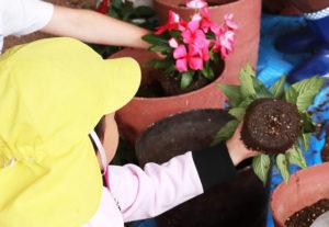 地下鉄ブルーライン新羽駅高架下の花壇の花植えが「新羽の未来をつくる会」メンバーや保育園児らにより行われた(5月20日)