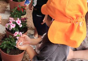 3歳児クラスの約20人は固形肥料を追加するお手伝いも