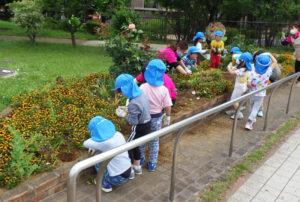 花を植える前の「下準備」を行った5月17日には、通りかかった保育園児たちが作業を手伝う風景も(新横浜町内会提供)