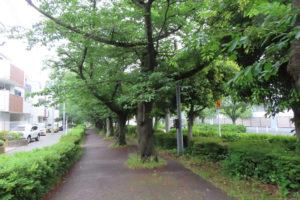 秋本さんの幼少時には、太尾新道付近に川が流れ、シジミが獲れたという