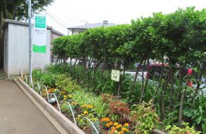 新設校だった中川西中学校で「花いっぱい運動」を展開し表彰されたことも、今の大倉山での「花と緑のまちづくり」につながっているという